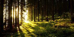 AL-Illu-Sonne-Baeume-Wald-_Rainer-Sturm_pixelio (jpg)