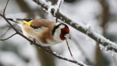 """Aktion """"Stunde der Wintervögel"""""""