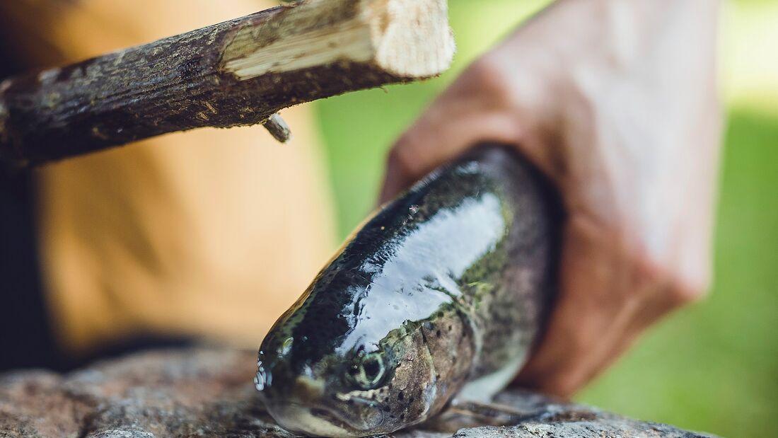 Angeln und Fisch ausnehmen