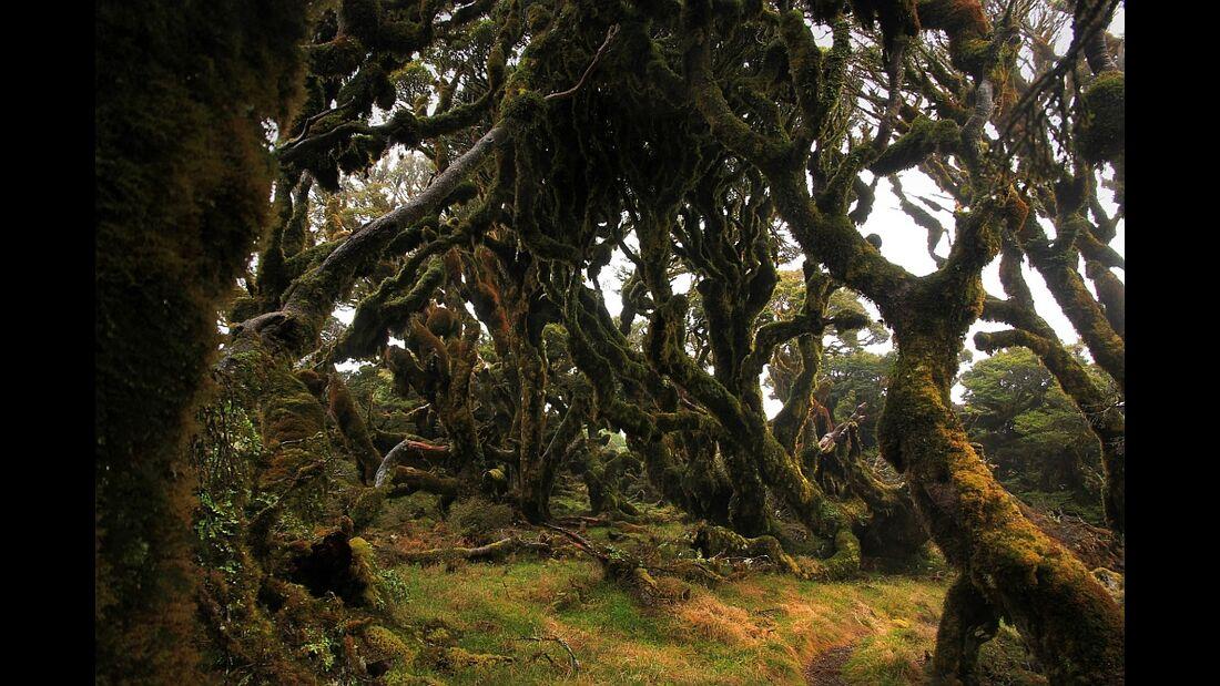 Aotearoa - Impressionen aus Neuseeland 39