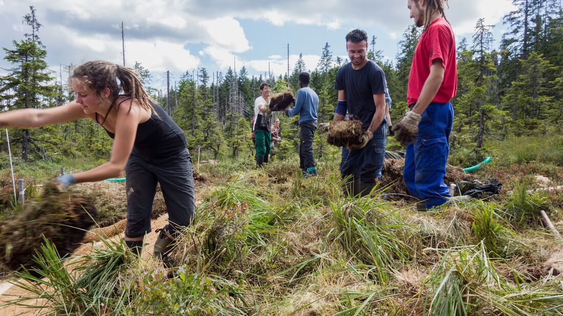 Bergwaldprojekte im Nationalpark Bayerischer Wald