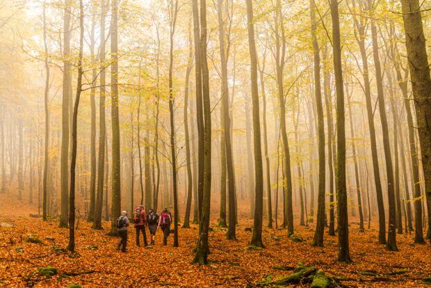 Bloggerwandern - Rheinland Pfalz