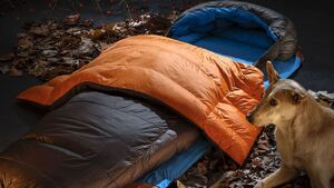 Editors Choice 2020 - Zenbivy Light Bed 10°