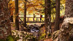 Feldberg - Schwarzwald - Herbst