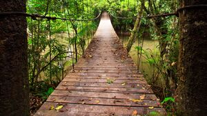 Hängebrücke im Dschungel