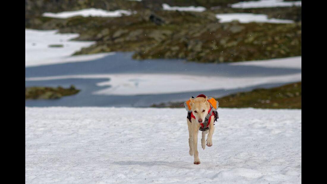 Hardangervidda: Paradies für Nordlandtrekker 26