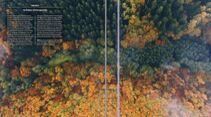 Herbstwald im Hunsrück