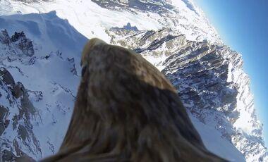 KL Mont Blanc von oben - gefilmt vom Rücken eines Königsadlers Vogelperspektive