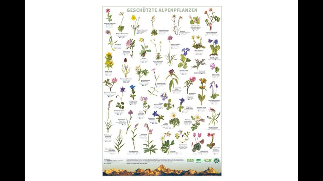 KL-seltene-Pflanzen-Alpen-DAV-Info-Plakat