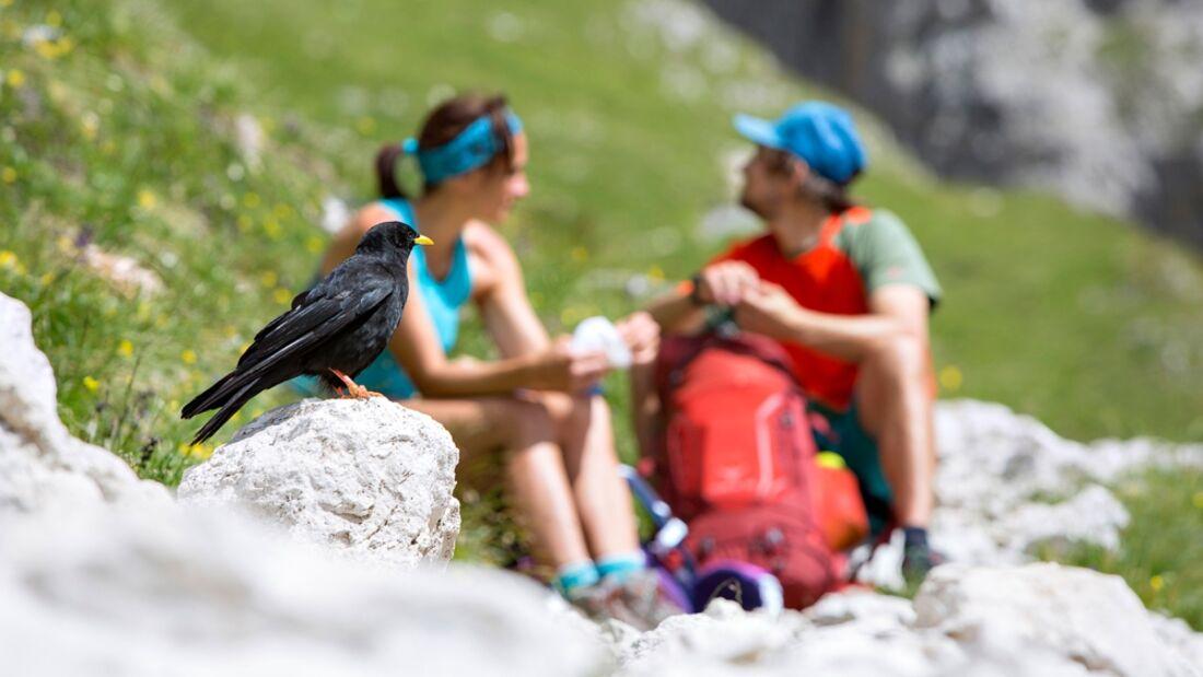 OD 0117 Palarunde Dolomiten Italien 03