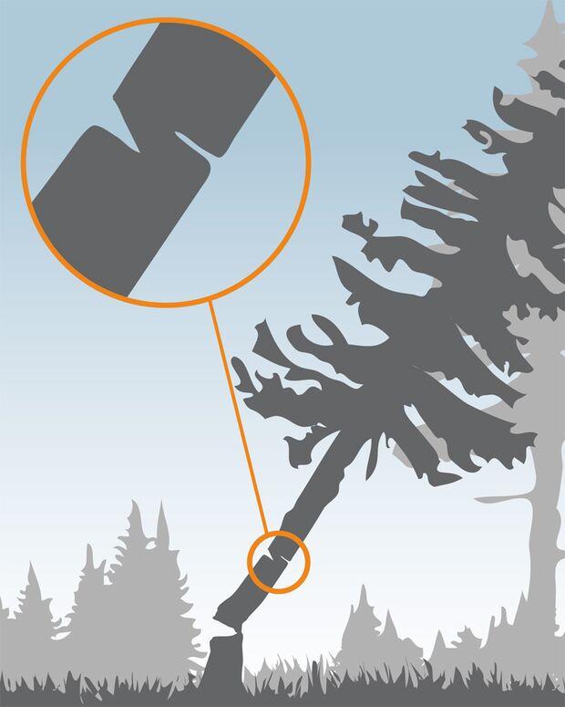 OD 0211 Instructor Baeume faellen Fallrichtung falsch (jpg)