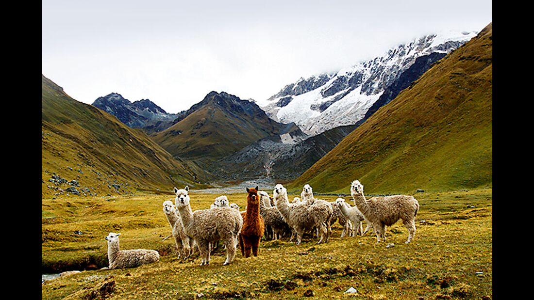 OD 0211 Reise Machu Picchu Salkantay Trek Bild 8 (jpg)