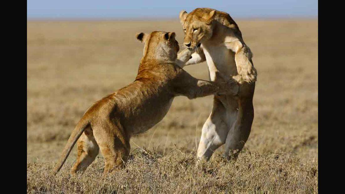 OD 0211 Serengeti Afrika Tiere Kinofilm2e (jpg)