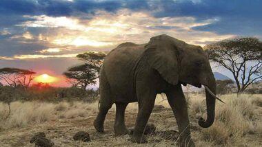 OD 0211 Serengeti Afrika Tiere Kinofilm9b (jpg)