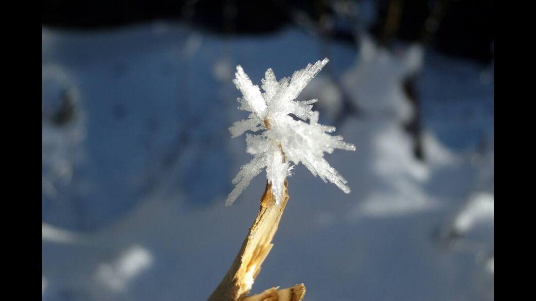 OD 0311_Winterbilder_Tamara Weisel