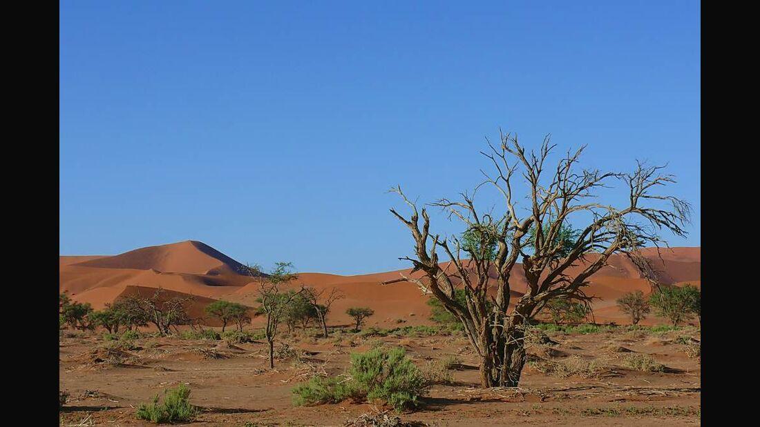 OD 0411 afrika namibia wueste