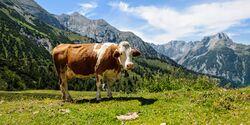 OD 0616 Karwendel Sonnjoch