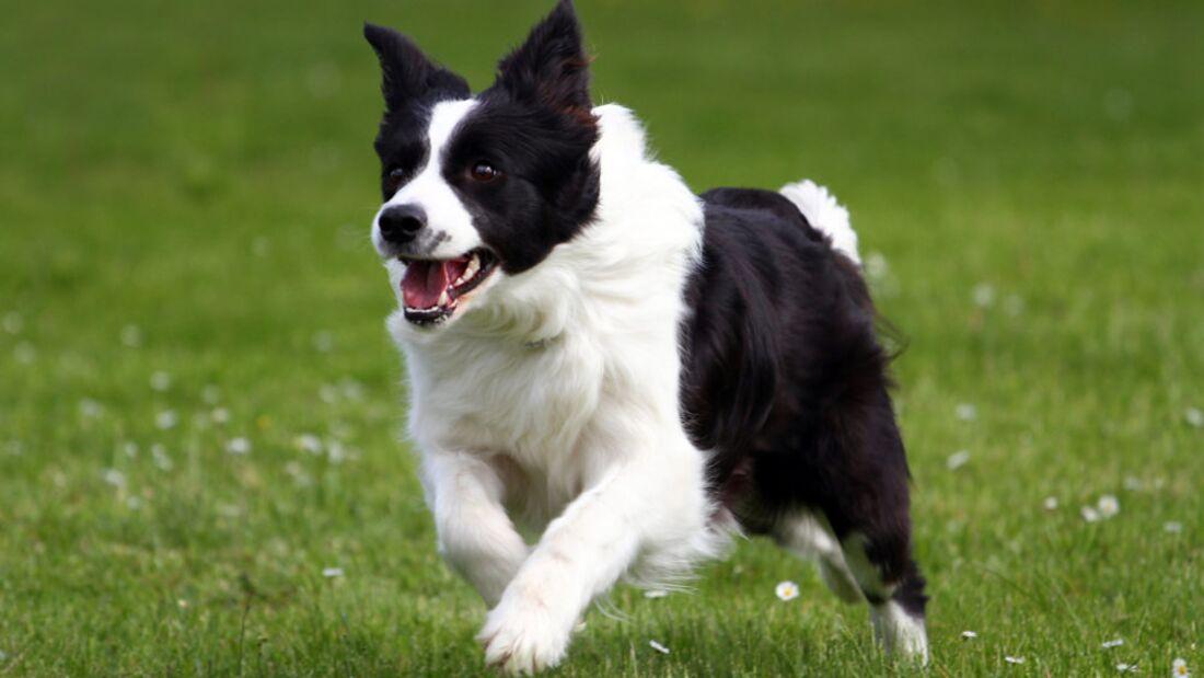 OD 0711 5 Tipps Verhalten gegenüber Hunden Heft 07