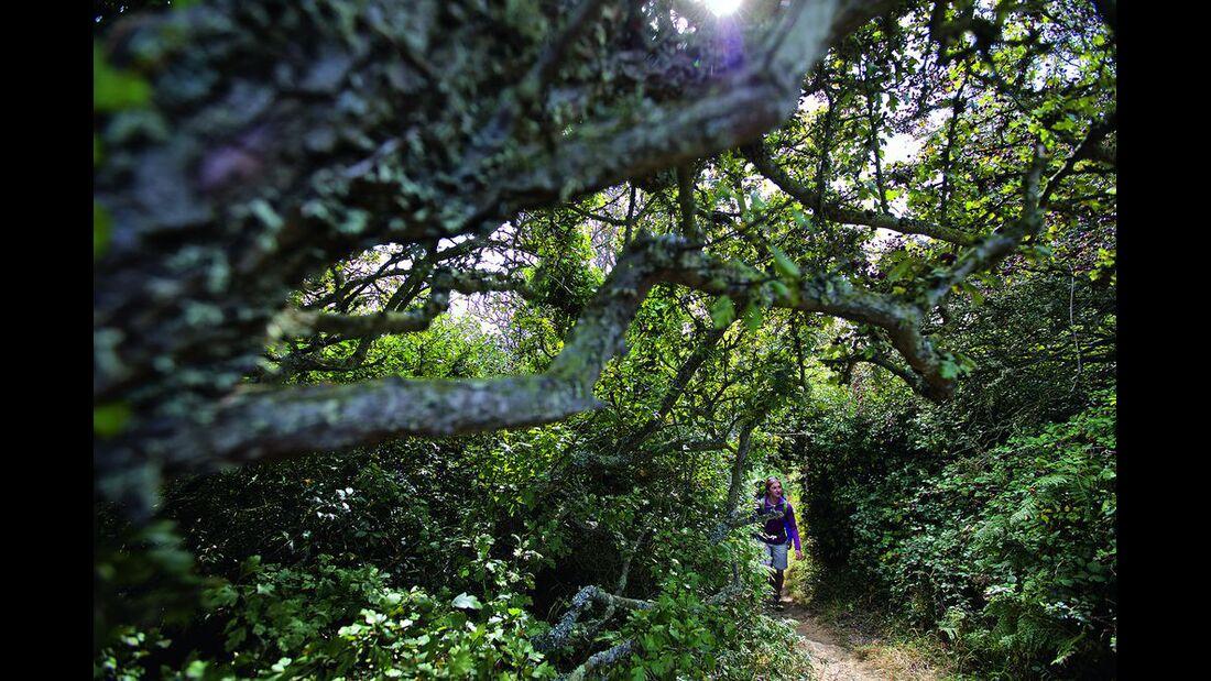 OD-0815-Wales-Pembrokeshire-Path-9b (jpg)