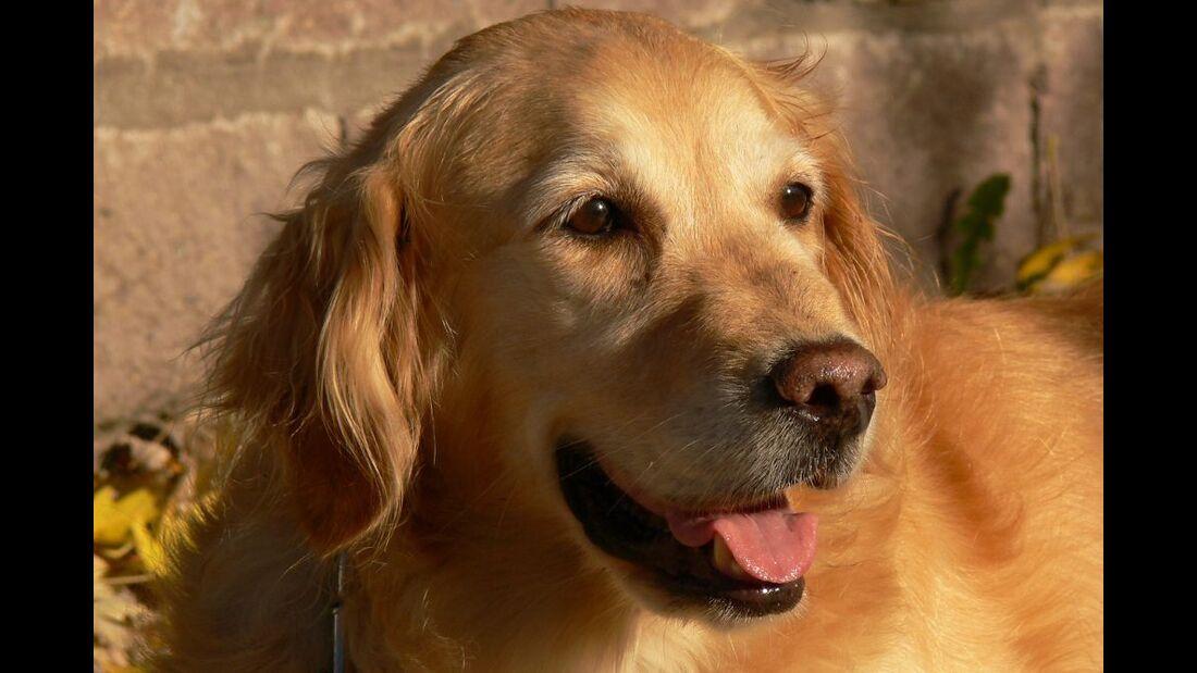 OD 0911 Huettenregeln Hund (jpg)