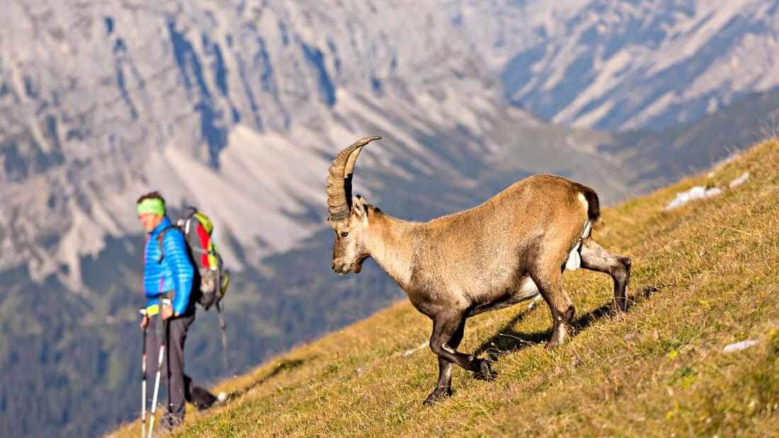 OD 0917 Karwendel Österreich Gamsjoch