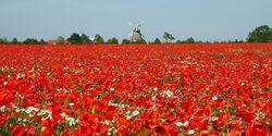 OD 1 Frühlingstouren Blumenfeld Frühjahr Frühsommer pixelio
