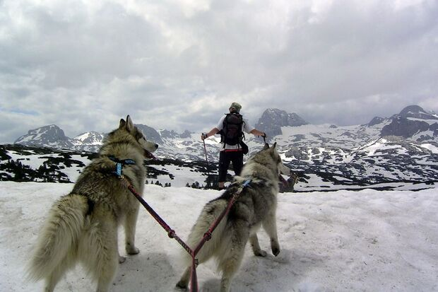OD 1210 Abenteuerrennen Iditarod Schlittenhunde-Christian-Vajk_pixelio.de (jpg)