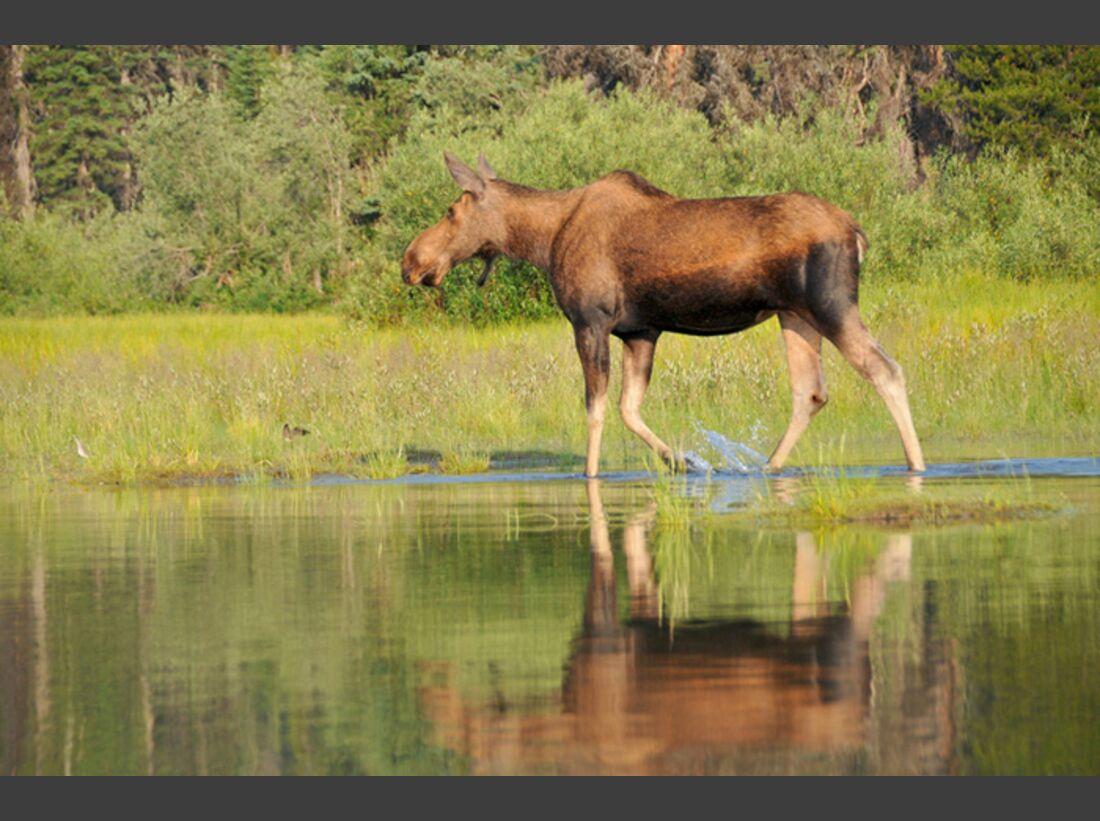 OD 1210 Kanada Bowron Lakes_TOS_6335 (jpg)