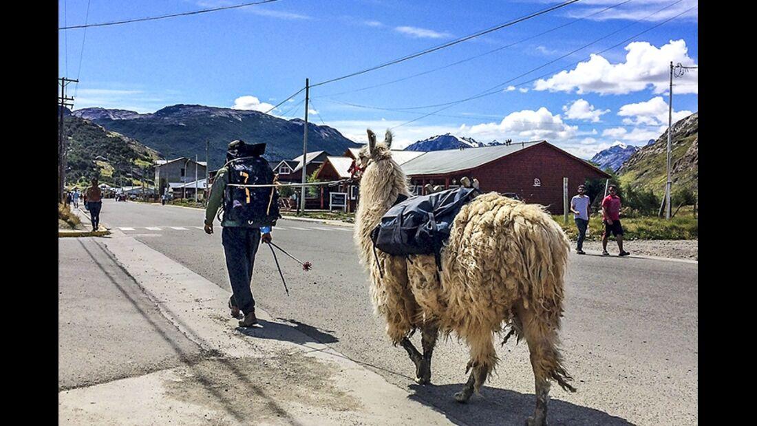 OD 1216 Patagonien Lama