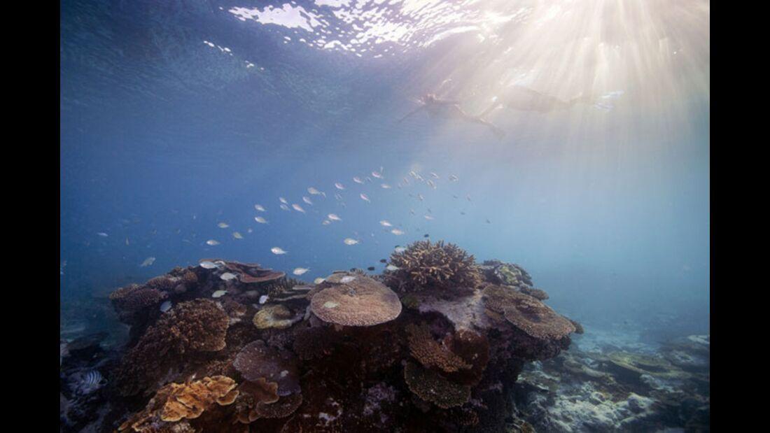 OD 2011 Australien Great Barrier Reef (jpg)