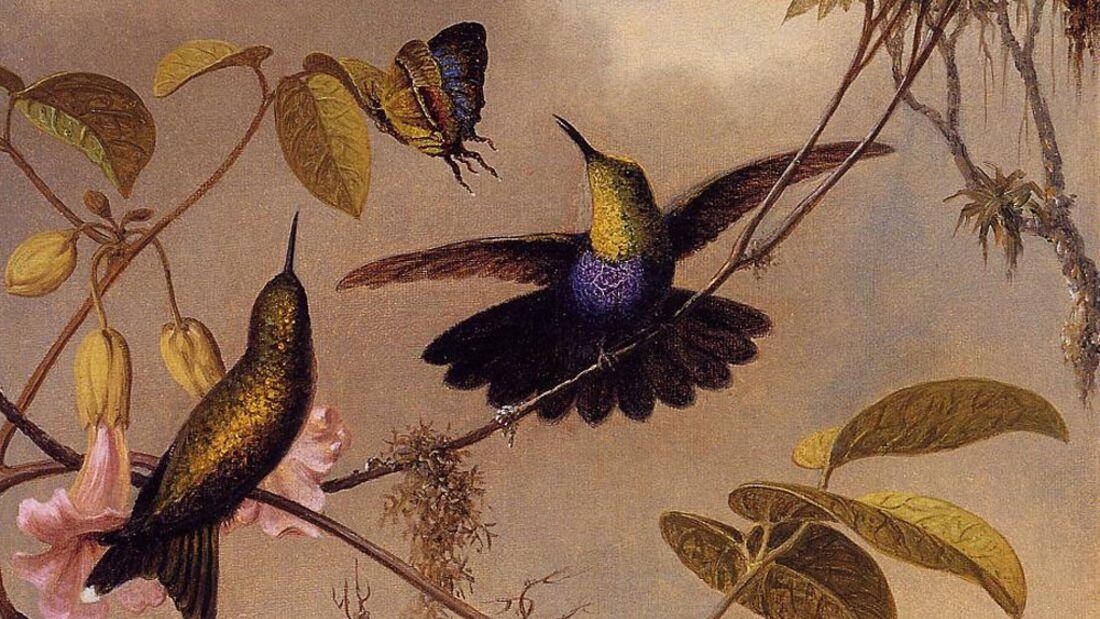 OD 2011 Tierwelt Vögel Kolibri Schwalbennymphe