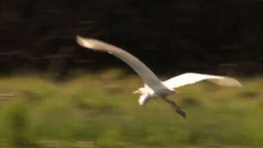 OD 2013 Kinofilm Deutschlands Wilde Vögel Vogel Natur Doku