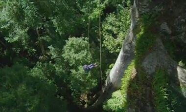OD 2014 Das Geheimnis der Bäume - Teaserbild