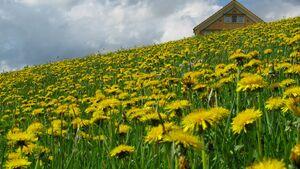 OD 2015 Appenzellerland Säntis Wandern Impressionen 8 Frühling Blumen