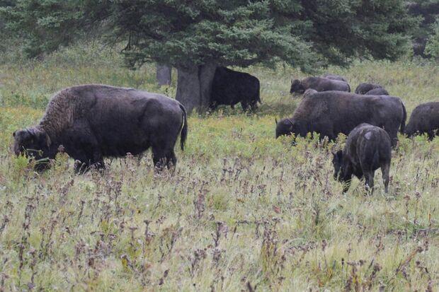 OD 2016 Manitoba Kanada Philip Duckwitz Bisons