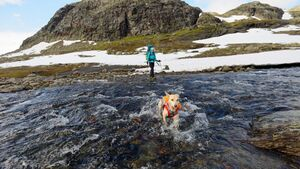 OD 2016 Trekking mit Hund Hardangervidda Norwegen