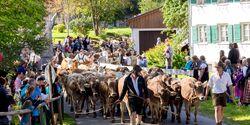 OD 2018 Pfronten Allgäu Almabtrieb Viehscheid Tradition Fest Event
