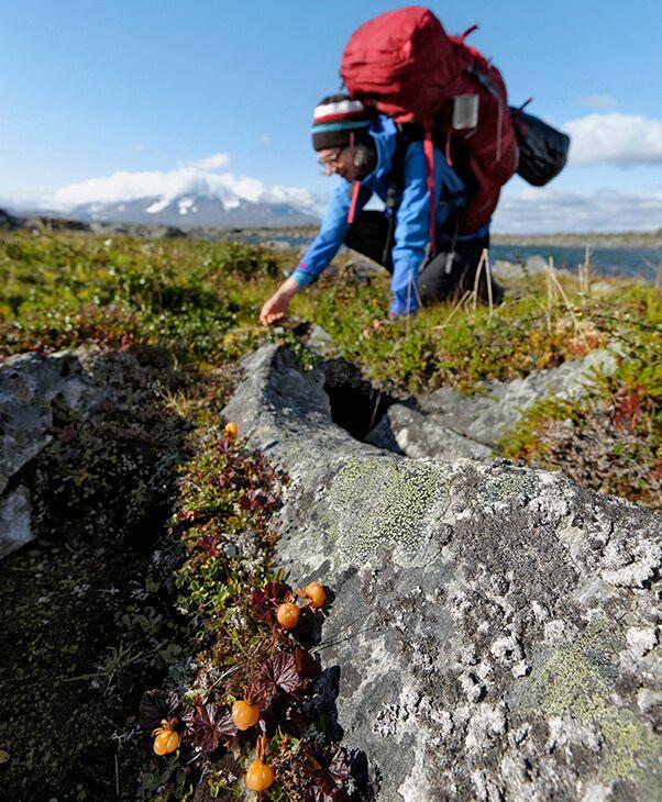 OD 2018 Tamron Fotoschule Teil 3 Beeren Norwegen Berg Trekking