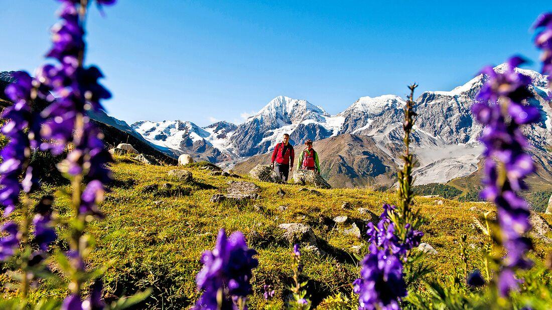 OD 2019 Südtirol Ortler Blumen Berge Alpen Wandern Wanderer