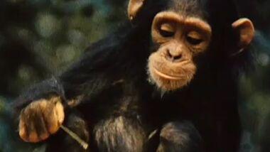 OD Affenforscherin Jane Goodall Film