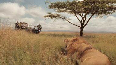 OD Afrika Südafrika Löwe Tiere Video-Teaser