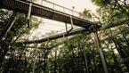 OD Baumkronenweg Treetop-Walk Hessen
