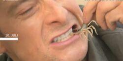 OD Bear Grylls DMAX Wildnis Survival 6.Staffel Juli 2011