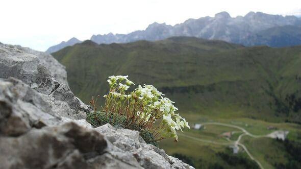 OD-Bergfotos-des-Jahres-Berglandschaft-Lena-Merz-Neuwied (jpg)
