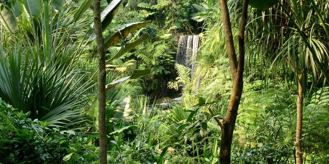 OD-DerWaldRuft-Urwald_Wasserfall_Masaola_by_Hamfel_pixelio.de (jpg)
