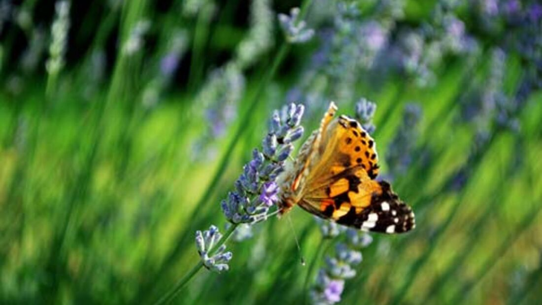 OD Die besten Frühjahrs-Ziele: Provence