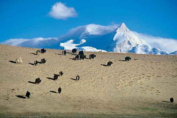 OD Die letzten Abenteuer der Erde: China - durch den Sand der Wüste Gobi
