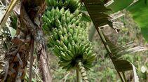 OD Gutes aus der Natur: Früchte und Nüsse - Banane