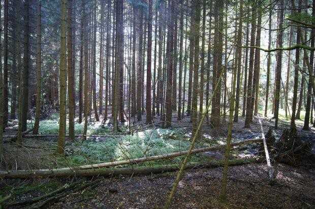 OD-KEEN-Durand-Leseraktion-Marina-Buchholtz-2014-024 (jpg)