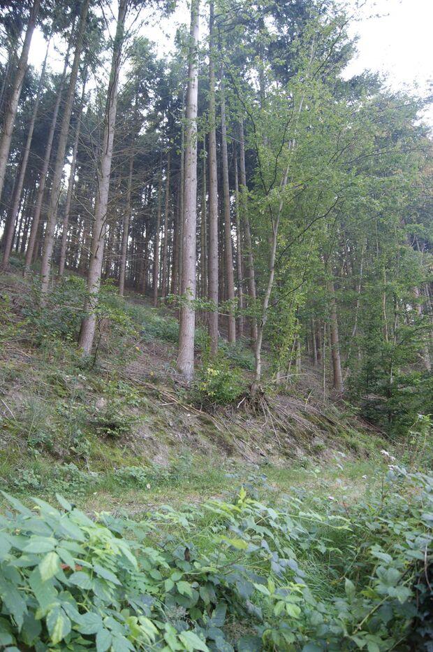 OD-KEEN-Durand-Leseraktion-Marina-Buchholtz-2014-09 (jpg)